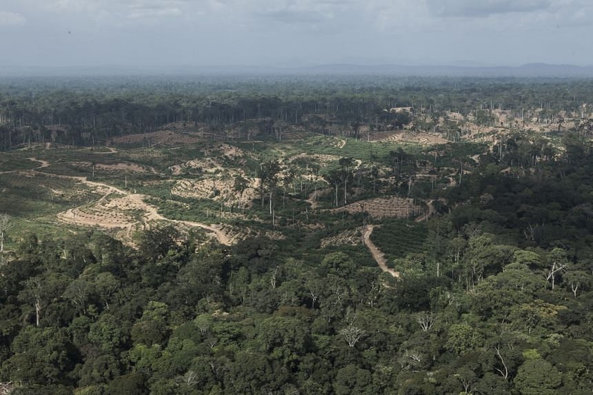 View of what are said to be Olam International's oil palm plantations in Gabon. The palm oil player is developing two projects in the African nation, both joint ventures with its government. Analysis by two NGOs found that Olam has cleared about 20,0