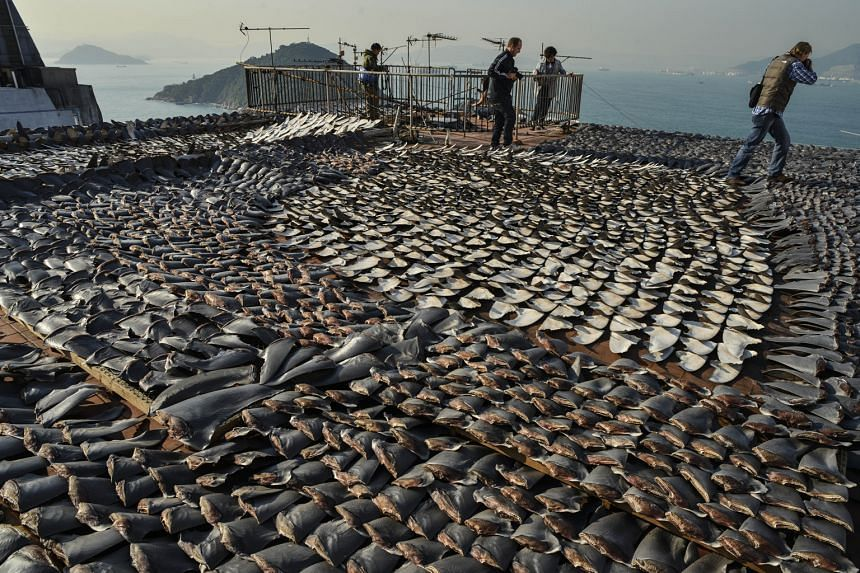 "A photo taken in 2013 showing hundreds of shark's fins being dried in the sun on the roof of a factory building in Hong Kong. Conservation group WildAid has called on Hong Kong to do more to stamp out the shark's fin trade there, which it said was ""e"