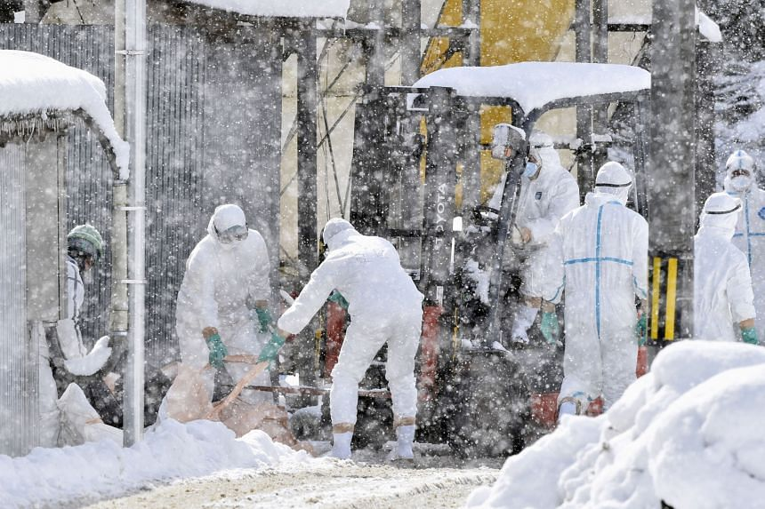 Officials culling chickens during a snowstorm at a poultry farm in Yamagata in central Japan after a highly virulent strain of bird flu was detected there earlier this month.