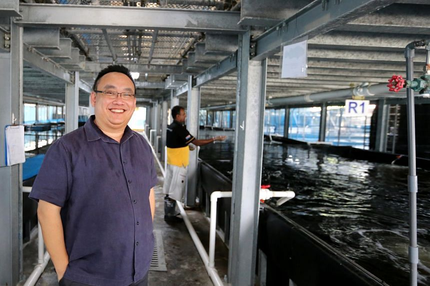 Mr Ng, group CEO of Apollo Aquaculture, at his company's farm in Lim Chu Kang, one of 62 that will see their leases expire in 2019.
