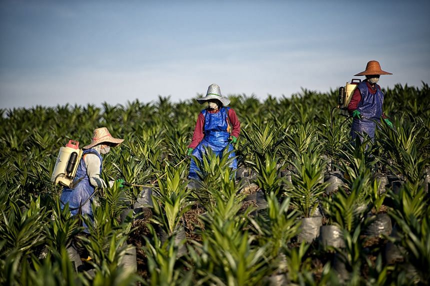 Workers at Wilmar's Sabah plantation. The firm's net profit for the 12 months dipped 5 per cent to US$972.2 million from a year earlier, while revenue was up 6.8 per cent to US$41.4 billion as greater sales volume was partly dragged down by lower com