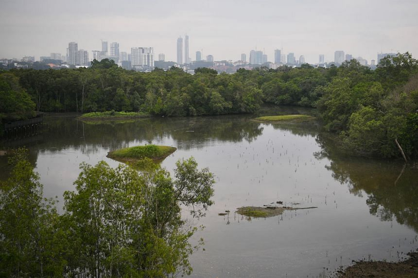 More crows have been seen at Sungei Buloh Wetland Reserve (below). These birds have been known to harass other bird species at a feeding site, or raid their nests.