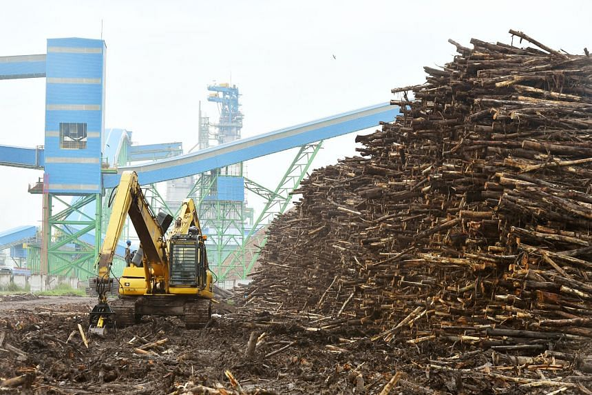 Asia Pulp and Paper's mill in South Sumatra's Ogan Komering Ilir district has the option to produce far more than the firm had given the impression it can - a government licence showed the mill had approval to produce up to 3.25 million tonnes of pulp a y