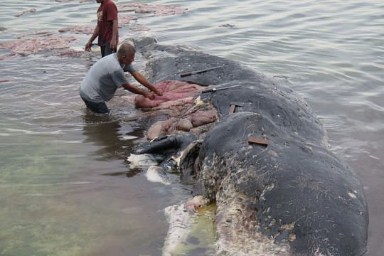 Sperm whale washed up in Indonesia had nearly 6kg plastic bottles, bags in stomach