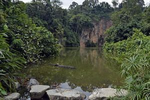 View of the Quarry Cliff at Bukit Batok Nature park. -- ST PHOTO: DESMOND FOO