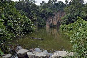 View of the Quarry Cliff at Bukit Batok Nature park.-- ST PHOTO:DESMOND FOO