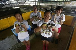 Ms Chelsea Wan (second from right) became a frog farmer to help her dad and to educate the public on the industry. But she is not sure of her career choice now with the impending move. With her are workers (clockwise from left) Mel Han, 24, Charlane