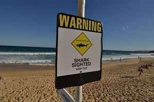 A shark warning sign on the beach in the northern New South Wales city of Newcastle on Jan 17, 2015. -- PHOTO: AFP
