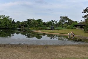 A family watching ducks in the Eco Lake in Botanic Gardens on Feb 24, 2015. The unusually dry weather since the start of the year is expected to continue for another two weeks at least. -- PHOTO: CAROLINE CHIA