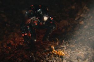 Paul Rudd (above) as superhero Ant-Man, dealing with the little critters.