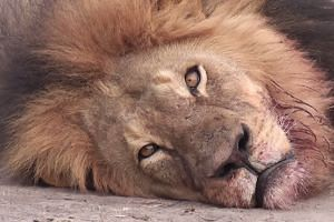 A screenshot of Cecil from a tourist's online video.