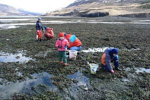 An Icelandic family foraging at Hvalfjordur (left); and members of the Reyka Expedition team preparing mussel soup for lunch (below).