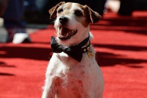Uggie the dog at his hand and paw print ceremony in Hollywood on June 25, 2012.