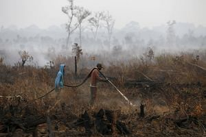 Indonesian workers extinguish the fire at a palm oil plantation at the Pampangan district in Ogan Komering Ilir, Indonesia.