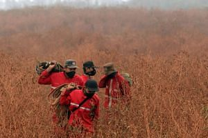 Indonesian firefighters carry fire hoses through a field on their way to extinguish a wildfire on peat land in the Reding area of Ogan Komering Ilir, Indonesia.