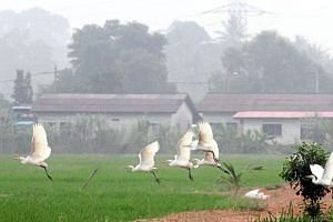The haze over Malaysia has also affected migratory birds.