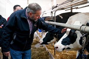 Canada's New Democratic Party leader Thomas Mulcair visiting a dairy farm in Quebec last Saturday. The extent of market access to sensitive sectors has been capped by some countries - Canada says that only 3.25 per cent of its dairy sector will be op