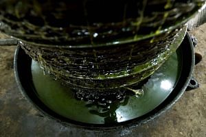 Olive oil is extracted from freshly-harvested olives at a mill.