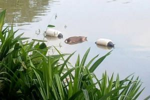Cat welfare group Yishun 326 Tabby cat posted photos of the dead cat floating beside two black and white objects which looked like buoys.