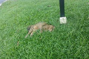 The cat was found dead with blood on its ears and mouth in Yishun on Dec 30, 2015.