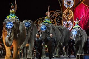 Elephants walk in the arena during a Ringling Bros and Barnum & Bailey Circus performance in Washington, DC, in 2015.