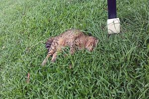 Police are investigating the cat deaths which have occurred in Yishun since September last year.