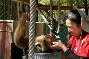 Ms Sirada Dejvuttikul with her gibbon Ooh at the WFFT.