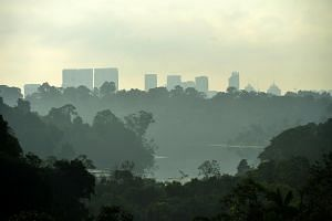 Paranomic view of the Central Catchment Nature Reserve from Jelutong Tower.