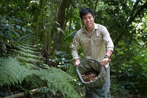 Mr Wong, who recently discovered a new ant species, is hoping to raise $3,000 via a US-based science crowdfunding website for scientific journal publication fees and to buy better equipment for his research.