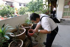An NEA officer checking the potted plants outside a home for mosquitoes.