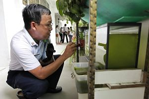 An environment health officer from the National Environment Agency (NEA) checks containers of water along a corridor for dengue risks.