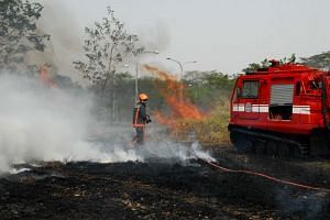 A file photo of a bush fire in Tampines in 2010. The number of vegetation fires in Singapore in the first three months of the year has slipped by 70 per cent compared to the same period last year.