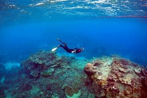A man snorkels during an inspection of the Great Barrier Reef's condition.