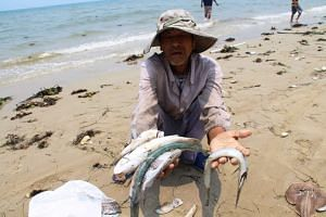 A villager shows dead sea fish he collected on a beach in Phu Loc district, in the central province of Thua Thien Hue on April 21, 2016.