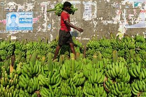 An Indian labourer carries bananas at the Koyembedu Fruit Market in Chennai.