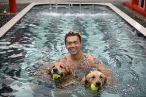 Mr Derrick Tan playing with dogs in a swimming pool at dog day-care centre Sunny Heights.