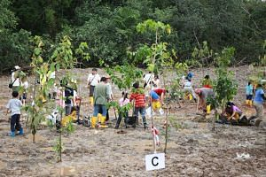 Participants planting mangrove saplings at the new mangrove arboretum in the Ubin Living Lab.