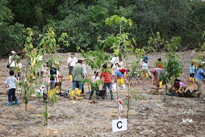 Participants planting mangrove saplings at the new mangrove arboretum in the Ubin Living Lab.