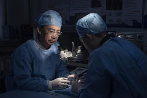 Pictures of mice in Dr Ren's lab in Harbin, China. He has experimented with head transplants on mice but they have lived for only a day. Dr Ren Xiaoping of Harbin Medical University proposes to remove two heads from two bodies, then connect the blood