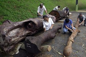 The Sculpture Society of Singapore transformed salvaged parts of the 150-year-old Hopea Sangal tree into works of art.