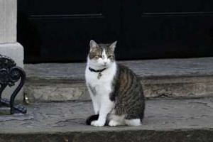 Larry the Downing Street cat outside 10 Downing Street in London on July 12, 2016.