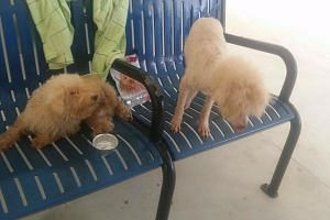 Two of the abandoned dogs rescued by Voices For Animals.