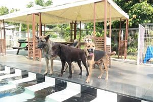 Dogs pictured at the Sunny Heights dog day care centre in Singapore.