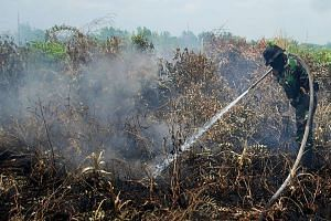 An Indonesian soldier tries to extingusih a peatland fire in Kampar, Riau, Sumatra island, Indonesia on Aug 23, 2016.