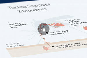 The first case of locally transmitted Zika infection in Singapore was reported on Aug 27. Since then, more cases have been reported.