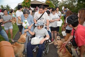 Madam Tan (in blue) with her son Isaac as he gets his wish to pat as many golden retrievers as possible.
