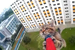 A kitten that was trapped on a 12th-storey ledge was rescued by an SPCA officer.