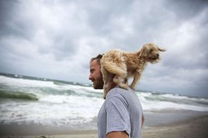 Ted Houston and his dog Kermit visit the beach as Hurricane Matthew approaches the area on Oct 6, 2016, in Palm Beach, US.