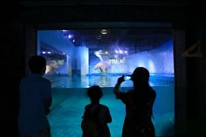 """A polar bear named """"Pizza"""" inside her enclosure at the Grandview Shopping Mall in Guangzhou on Oct 28, 2016."""
