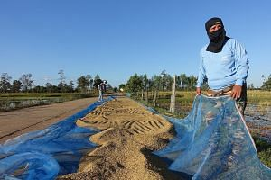 Farmers dry their freshly harvested paddy along a village road in Ubon Ratchathani, a province in the north-east Isan region of Thailand. Agricultural workers make up some 30 per cent of the country's workforce. Isan, where the Puea Thai party draws